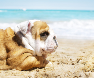 dog, cute, and beach image