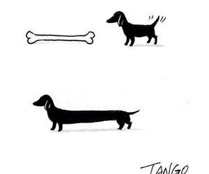 dog, bone, and funny image