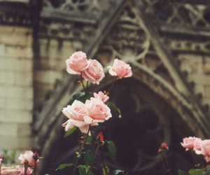 beautiful, church, and pink image
