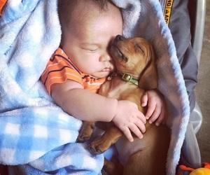 animals, dog, and babies image
