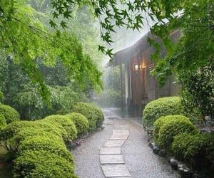 rain and green image