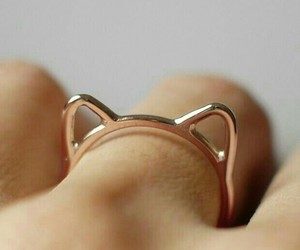 cat and ring image