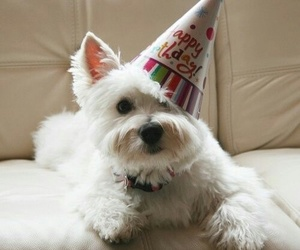 dog, gift, and happy birthday image