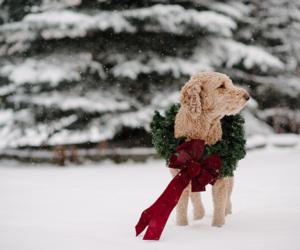 christmas, dog, and snow image