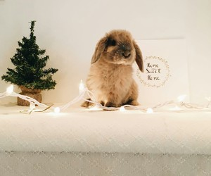 animal, bunny, and christmas image