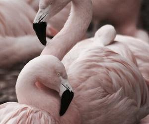 amazing, animals, and beauty image