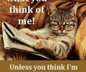 cat, awesome, and funny image