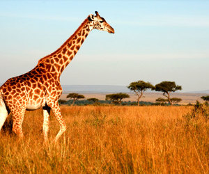 africa, holiday, and luxury image