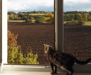 kitten, nature, and window image