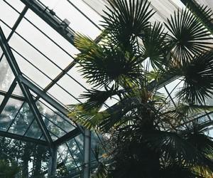 green, plants, and tumblr image