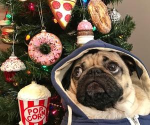 dog, pug, and christmas image