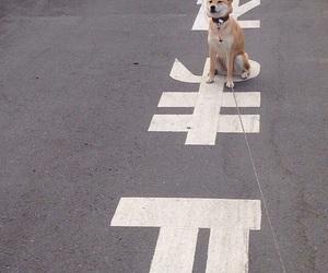dog, cute, and grunge image
