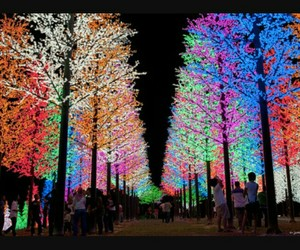 beauty, lights, and colour image