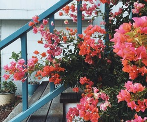architecture, flowers, and love image