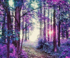 purple, forest, and landscape image