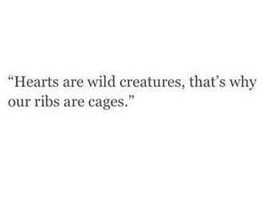 quotes, cage, and wild image