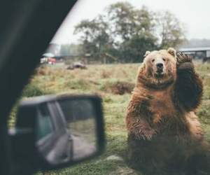 bear, lovely, and cute image