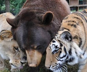 animals, bear, and cute image