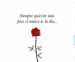 amor, flower, and rosas image