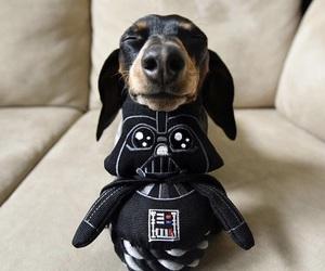 dog, star wars, and darrh vader image