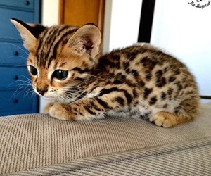 cute, adorable, and animal image