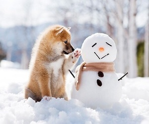 christmas, puppy, and snow image