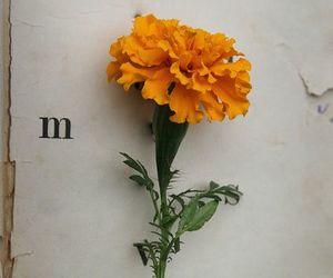 flowers, beauty, and orange image