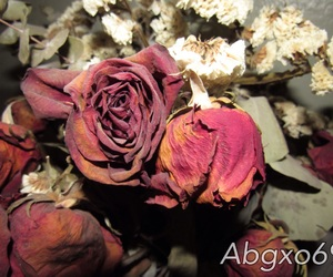 dead, flowers, and rose image