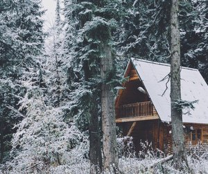 cozy, far away, and forest image