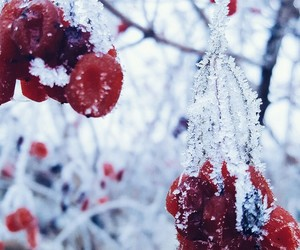 cold, plants, and freez image