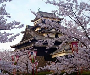 japan and giappone cherry blossom image