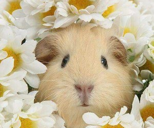 cute animals and flowers image