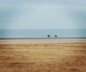 beach, deauville, and horse image