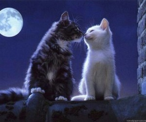 cat, moon, and kiss image