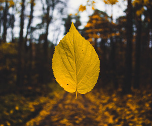 autumn and photography image