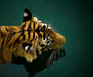 animal, free, and asia image