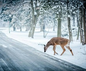 deer and winter image