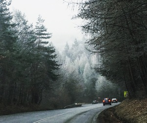 forest, mist, and road image