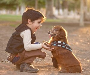 dog, cute, and boy image