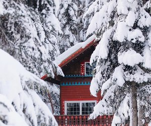 christmas, house, and forest image