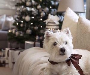dog, christmas, and decoration image