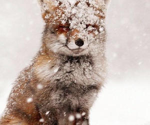 snow, fox, and winter image