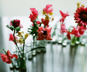 flowers, photography, and red image