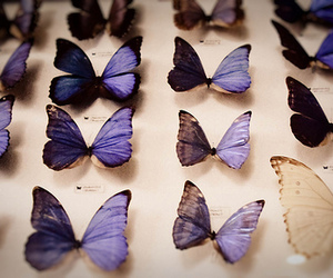 butterfly and purple image