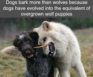 dogs, wolves, and facts image