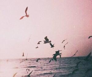 bird, sea, and ocean image