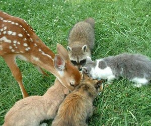 animal, cat, and deer image
