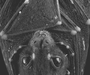 bat, black, and animal image
