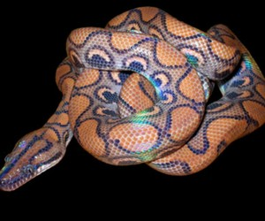 pretty and snake image
