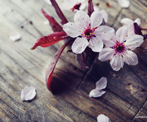 flowers, pink, and cherry blossoms image